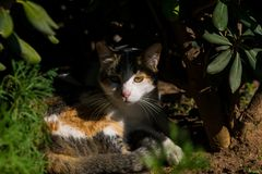 Tortoiseshell cat hiding in the garden shade from the midday sun royalty free stock images