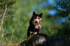 Tortoiseshell cat on the hunt Stock Photo