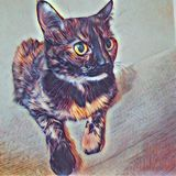 Tortoiseshell Cat. My tortoiseshell cat Raccoon, sitting on a the couch with her giant eyes wide open. My own personal photo, added background effect royalty free stock images