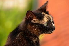 Tortoiseshell cat portrait Stock Image