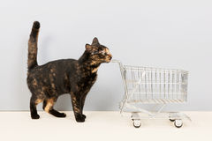 Tortoiseshell cat with shopping cart Royalty Free Stock Photos