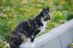 Tortoiseshell cat sits on the street. Against the background of green grass stock photos