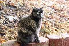 Tortoiseshell cat on a wall. A tortoiseshell cat sitting on a retaining wall stock photo