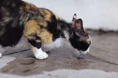 Tortoiseshell color cat Stock Images