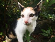 Tortoiseshell kitten cat sitting in bush and looking for victim stock photo