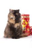 Tortoiseshell Persian. A Lunar New Year Greeting from flurry Tortoiseshell Persian fat cat stock photo