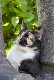 A tortoiseshell stray cat with the split face pattern. Beautiful tortoiseshell and white stray cat with the split face pattern in Sofia, Bulgaria royalty free stock photos