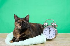 Tortie Tabby sitting next to alarm clock daylight savings royalty free stock image