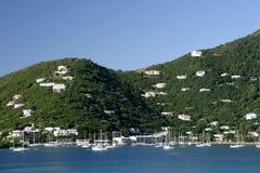 Tortola Photo libre de droits