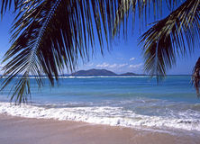 Tortola beach palm tree leaves Stock Photography