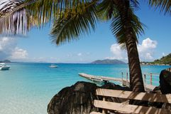 Tortola Royalty Free Stock Photo
