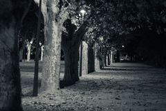 Tortosa, Catalonia, Spain - Line of trees at night Stock Photo