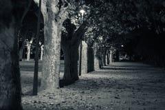 Tortosa Catalonia, Spanien - linje av träd på natten Arkivfoto