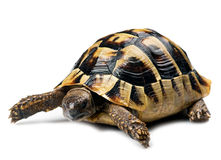 tortue Photo libre de droits