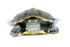 tortue Photos libres de droits