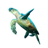 Tortue images stock