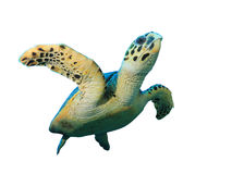 Tortue photographie stock