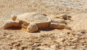 Tortue Photo libre de droits