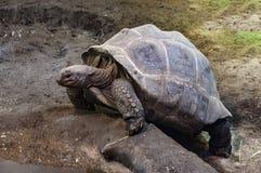 Tortue au zoo de Budapest image libre de droits
