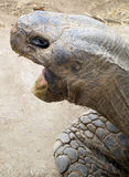 Tortue au zoo de San Diego Photos stock