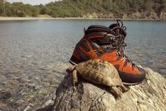 Tortue avec des bottes de montagne sur le fond de la mer Image stock