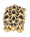 tortue birmanne d'étoile photographie stock
