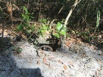 Tortue dans un trou tortue se cachant dans un trou creus? dans un parc photos libres de droits