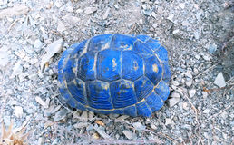 Tortue de bleu de Shell photo libre de droits