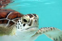 Tortue de l'eau images stock