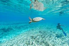 Tortue de mer Image stock
