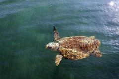 Tortue de mer d'imbécile en mer photographie stock