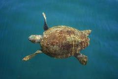 Tortue de mer d'imbécile en mer photographie stock libre de droits