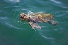 Tortue de mer d'imbécile en mer image stock