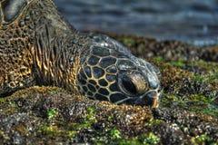 Tortue de mer dans HDR Image libre de droits