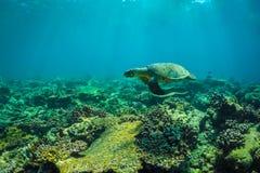 Tortue de mer et belle scène sous-marine avec l'espèce marine au soleil en mer bleue Paradis sous-marin des Maldives Images stock