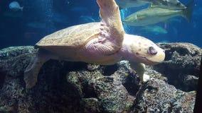 Tortue de mer géante Image libre de droits