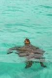 Tortue de mer, Galapagos Photo libre de droits