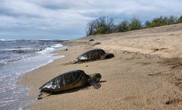 Tortue de mer hawaïenne sur la plage Image stock