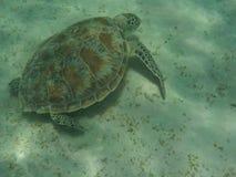 Tortue de mer nageant au-dessus du fond marin Image libre de droits