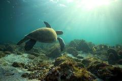 Tortue de mer nageant sous l'eau Photos libres de droits