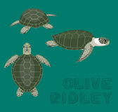 Tortue de mer Olive Ridley Cartoon Vector Illustration Images libres de droits