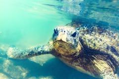 Tortue de mer sous-marine à la plage de Hikkaduwa Images stock