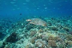 Tortue de mer sous-marine avec des poissons au-dessus d'un récif coralien Images stock