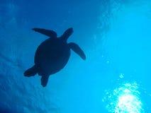 Tortue de mer verte Photo stock