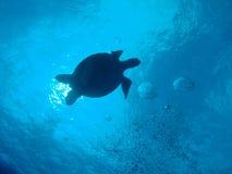 Tortue de mer verte Image libre de droits