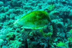 Tortue de mer verte avec le rayon de soleil à l'arrière-plan sous l'eau Image stock
