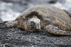 Tortue de mer verte en Hawaï photographie stock libre de droits
