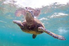 Tortue de mer verte hawaïenne Photos libres de droits