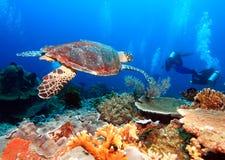 Tortue de mer verte près du récif coralien, Bali photos libres de droits