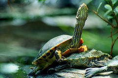 tortue de pouvoir Photo stock
